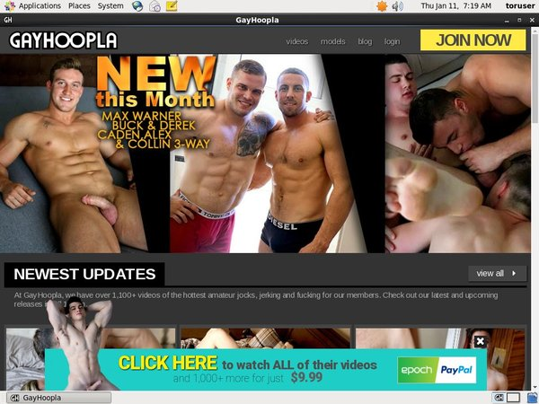 Gay Hoopla Limited Promo